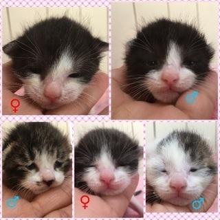 里親決定。保健所より緊急レスキューの子猫