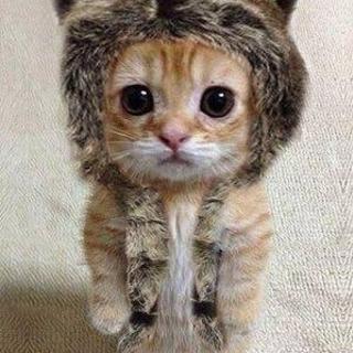 😆🌸猫好きさん、大大大歓迎っ🌸😊猫好きから友だちつくり😆🌸