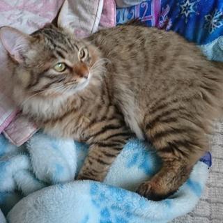 生後半年くらいの猫の里親募集致します。