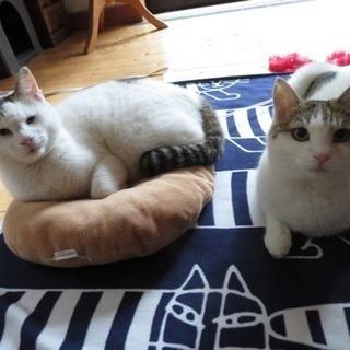 きょうだい猫 2〜4才  鎌倉「猫見亭」