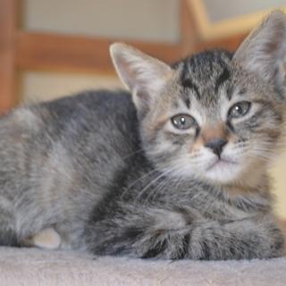 【代理投稿】 生後1ケ月半の仔猫