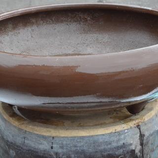 植木鉢、サツキで使用