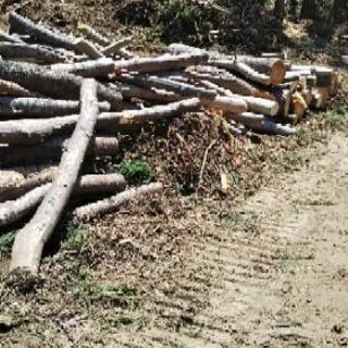 ストーブ薪原木 納得するまで積載