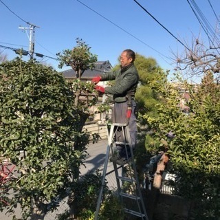 庭木の剪定 伐採致します 庭の手入れ店【所沢市 狭山市志木…