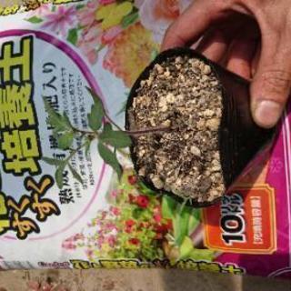 トマト苗+土セット(ベランダ栽培も可能)