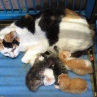 🆘保健所収容!期限間近🐱出産した可愛い三毛ちゃんが助けを待ってい...