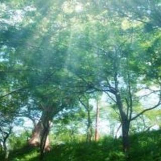 5/4 【みどりの日】グリーンカレー