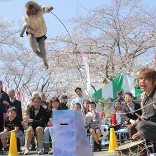 【来年GW】短期で稼げる お猿とパフォーマンスの付き添いアルバイト