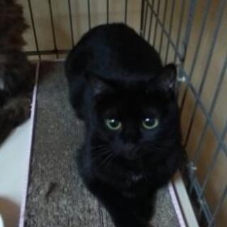 黒猫メス5才