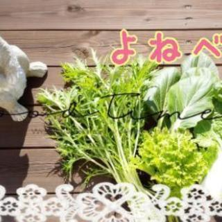お野菜【よねベジ】完全予約制