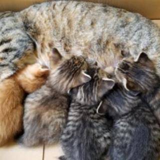 生後1か月😸猫団子5兄妹