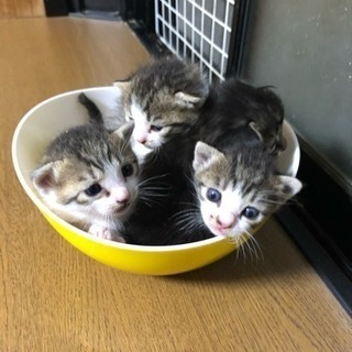 子猫達の里親になって頂けませんか?