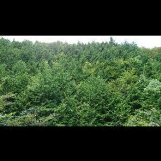 林業🌲長期で働ける方募集!
