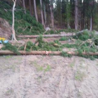 杉の原木 薪用
