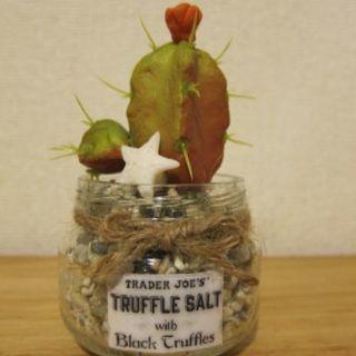 フェイク多肉植物  サボテン