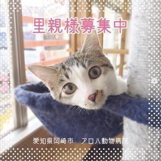【里親募集】好奇心旺盛で人なつっこい雑種の猫ちゃん