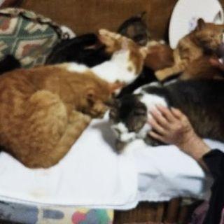 1歳から3歳の猫8匹の里親を募集しております。
