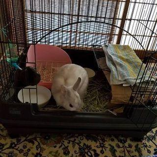 迷いウサギを飼ってください。