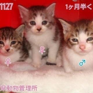 🆘保健所収容!ちびっ子子猫🐱家族を待っています🍀