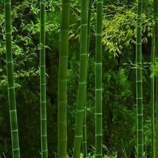 竹林の竹を譲ってください