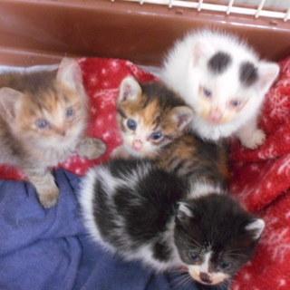 ♡とても可愛い子猫 4兄弟おります。