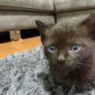 生後1ヶ月位の子猫ちゃん