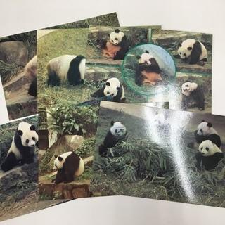 広州動物園 パンダはがき 6枚組