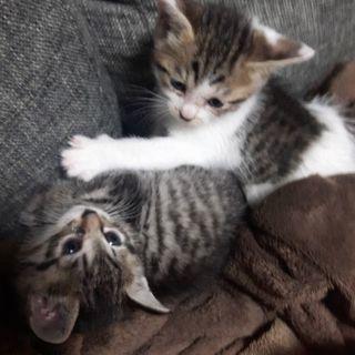 2匹のかわいい子猫