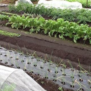 家庭菜園したいのに