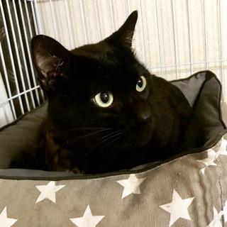 イケニャン黒猫くん