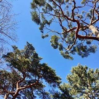 第3回大宮公園パークヨガ(氷川神社近く)