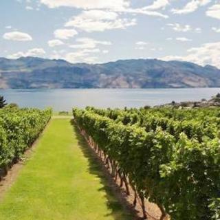 ワイン受験のための「葡萄の会」