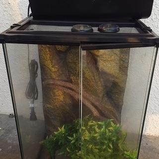 爬虫類 飼育 ケージ ガラスケージ