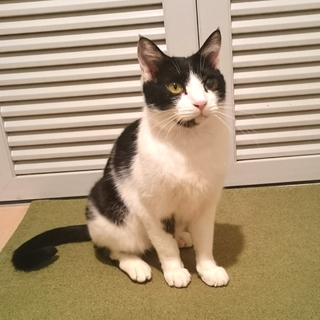 猫も人も大好き!スリゴロ甘えん坊な男の子です。