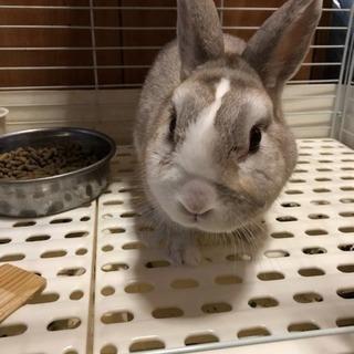 ウサギ貰ってください