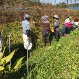 自然農学びの会鹿児島