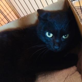 小柄な黒猫の女の子!