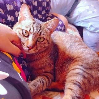 3歳8カ月のメス猫の里親を探しています。