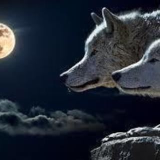 あなたは嘘を見破れるか⁉️  ✨✨🎊人狼交流会🎊✨✨in代々木