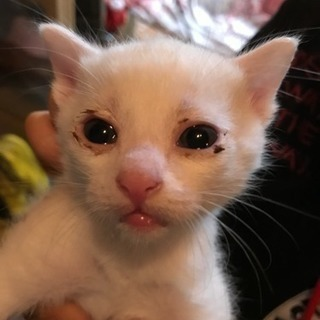 生後1か月の兄妹4匹 - 猫