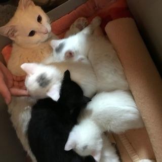 生後1か月の兄妹4匹 − 福岡県