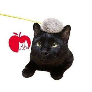 可愛い黒猫ジジ【里親さん募集中】