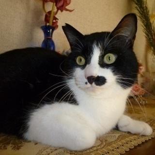 人が大好きな甘えん坊の可愛い白黒猫!