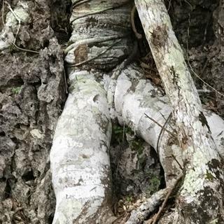 世界最古最先端だった古代日本の謎が沖縄から見えてくる。水族館や首里城の次の沖縄を探知する、心と知性の為のワクワク・ドキドキ散策ツアー。 - 奥武山公園