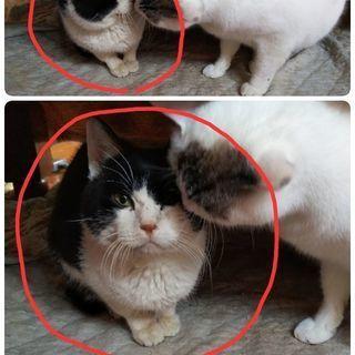 人懐っこい老猫ちゃん - 高梁市