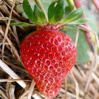 🌈 【農業体験】週末の気分転換に美味しい空気を味わおう🍓
