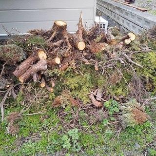 木伐採しました。薪などにいかがですか?