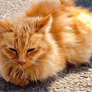 親子猫 − 千葉県