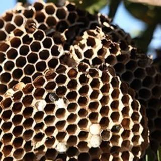 蜂の巣駆除 ☆キャンペーンあり - 便利屋
