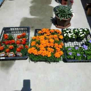 *花の苗*10ポット購入でお値引きあり*